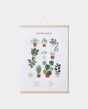 Poster HOUSEPLANTS